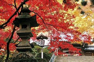 sagami_photo_1.jpg